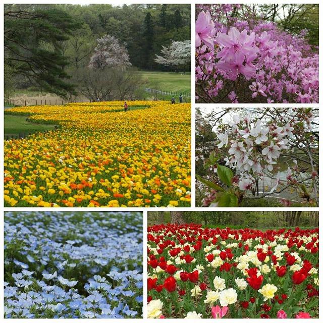 2017.4.15国営武蔵丘陵森林公園.jpg